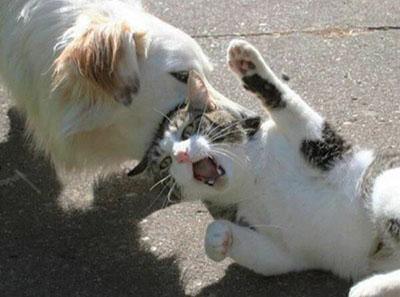 这狗也吸猫啊