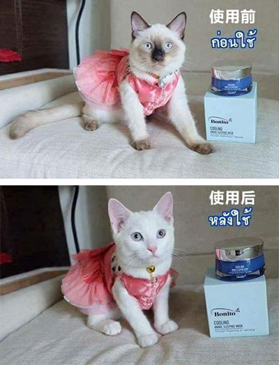 这是猫种歧视!