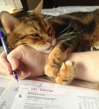 撸猫影响学习