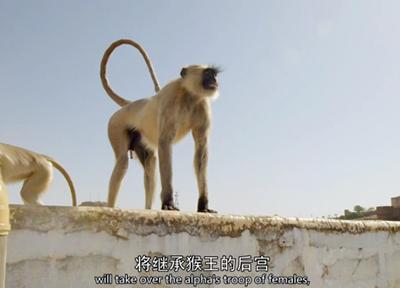 然而猴王早已看穿一切
