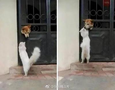 """""""傻X,有种出来打我啊!"""""""