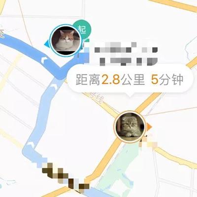 两只猫跨城会晤