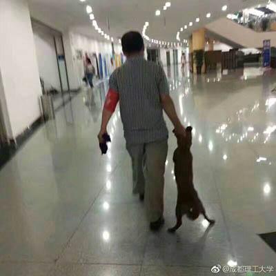 校园保安拖走了旁听狗。