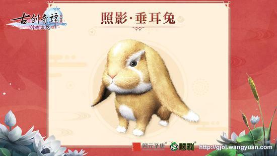 照影.垂耳兔