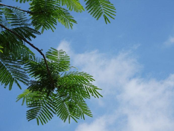 绿意盎然的南国热带花园