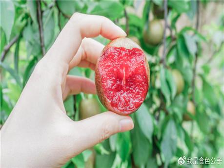 岭南夏令果王三华李的采摘季到了