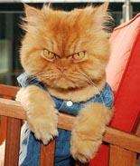 一只愤怒的猫咪