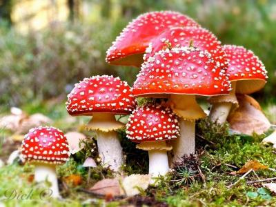 东莞食药监管部门发布毒蘑菇预警