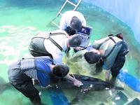 广东成功救治搁浅糙齿海豚放归大海