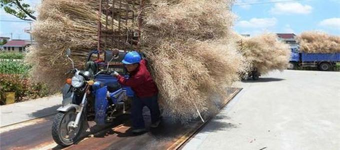 中国将加强生物质发电管理:严控发电不供热项目
