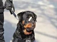 """广州公安上线电子犬证 给狗""""上户口""""刷脸即办"""
