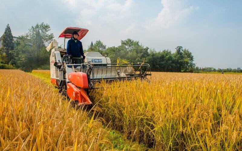 广东省秋冬种植面积拟达1040万亩