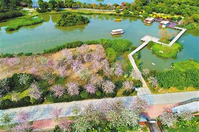 粤港澳大湾区将建森林城市群 省林业厅推荐广东最美湿地