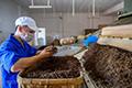 清远英德加强茶产业专业技术工人队伍建设