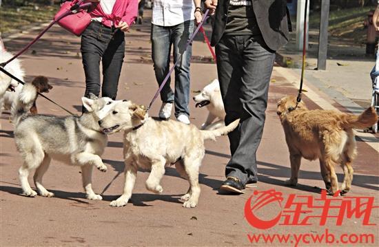 未来,在东莞办理养犬登记的犬只都将拥有一个智能犬牌 记者 王俊伟 摄