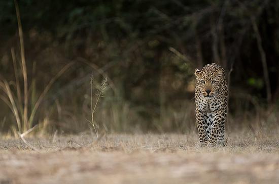 一只胆大的小公豹