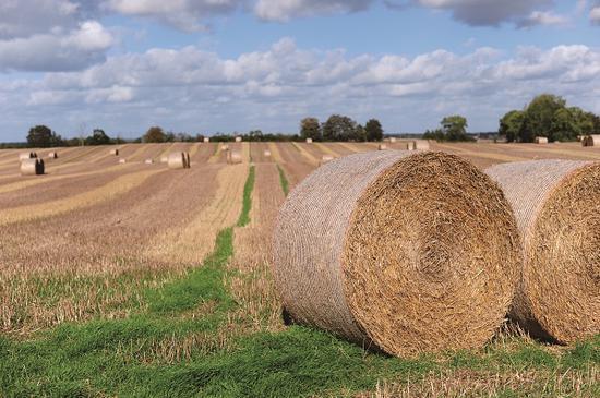 原野上堆放着圆滚滚的草垛
