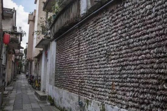 小巷深处的蚝壳墙(摄影许伟明)