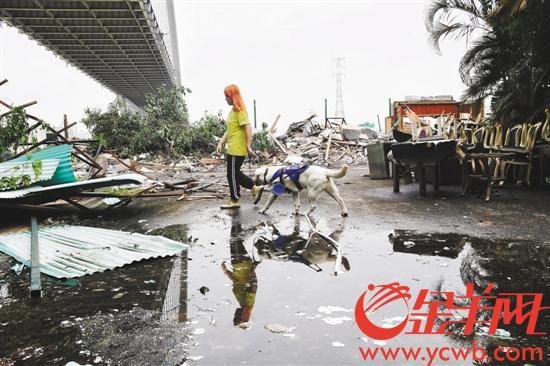 华南地区唯一一家导盲犬基地租约到期被清退