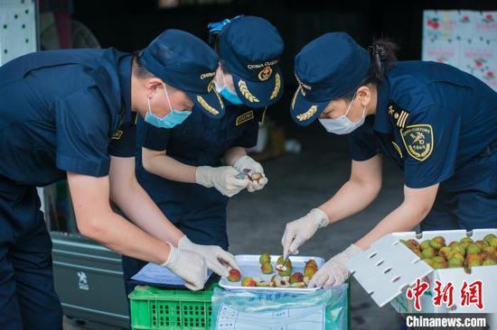 海关关员对出口荔枝采样进行检查。 资料图 张仕荣 摄