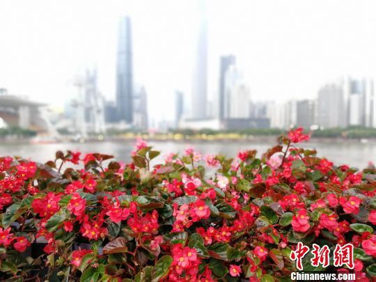 珠江边上的花卉(资料图)。 程景伟 摄