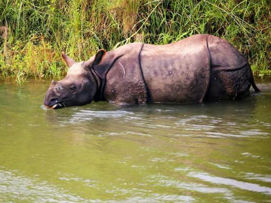 齐达旺国家公园的野生动物