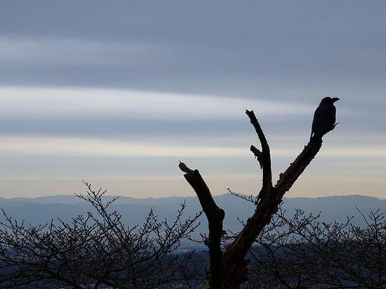 生驹山上的乌鸦