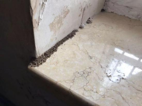 白蚁的排泄物