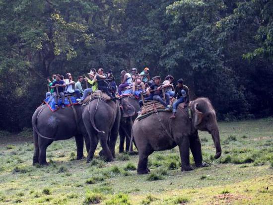 齐达旺国家公园零距离感受野生动物