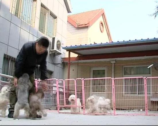 该宠物店店长王江说,