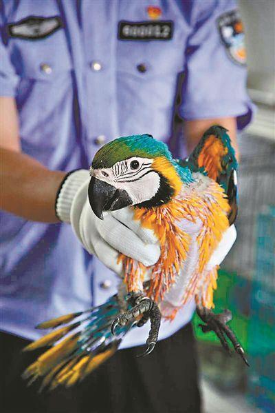 汕头海关查获的走私珍稀鸟类。