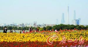 海珠湖公园的花朵绚丽绽放。广州日报记者邱伟荣 摄