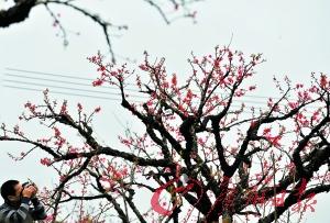 """桃花更""""争春""""。"""