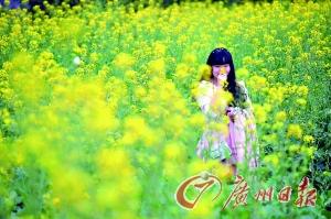 海珠湖公园的油菜花田。