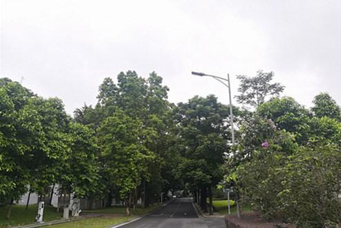 (11上午广州阴天为主,偶有零星小雨。)