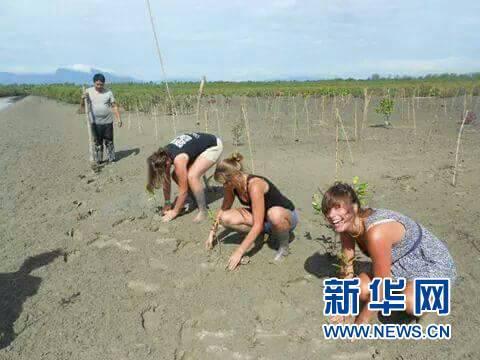 外国游客在红树滩涂学种红树