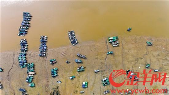 昨日湛江遂溪江洪渔港,回港避风的渔船 金羊网记者 邓勃 摄