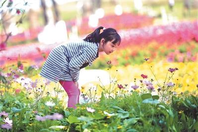 ▶赏花小心花粉过敏,孩子赏花最好别动手碰花。