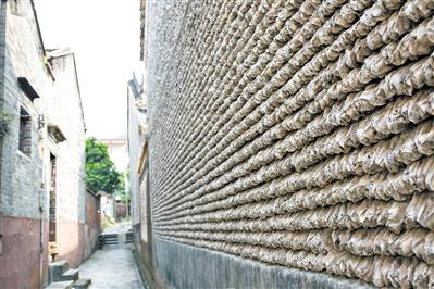 番禺的大岭村内仍保留有不少蚝壳墙。广报全媒体记者陈忧子 摄