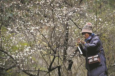 游客在赏梅。