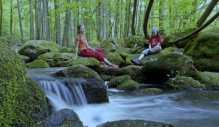 <strong>巴伐利亚森林</strong>是中欧最大的森林风景区。