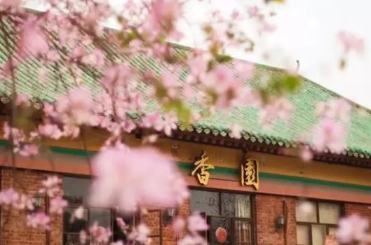 不过除了紫荆花,华农的黄风铃花也很好看,大家可以雨露均沾一点。