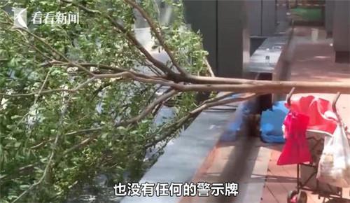 86岁老人竟被树枝砸到不幸身亡