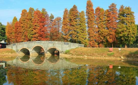 图:广州印象