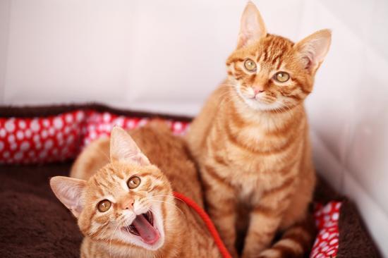 △小麦的猫:知了和小小