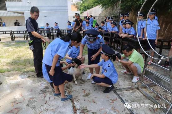 参观警犬基地,观看警犬训练。
