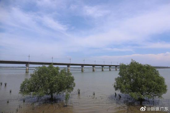 途径红树林保护区的铁路与自然和谐共存,做足了环境保护措施