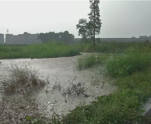 揭阳西湖村的三个池塘里倒满了这些东西