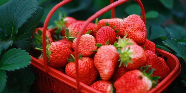 """""""莓""""好生活 """"莓""""好时光"""