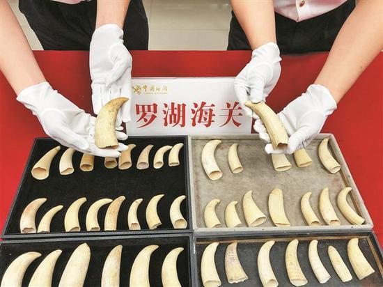 海关查获旅客携带入境的疑似抹香鲸牙齿55颗。